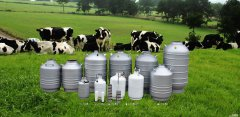 Liquid Nitrogen Artificial Insemination Semen